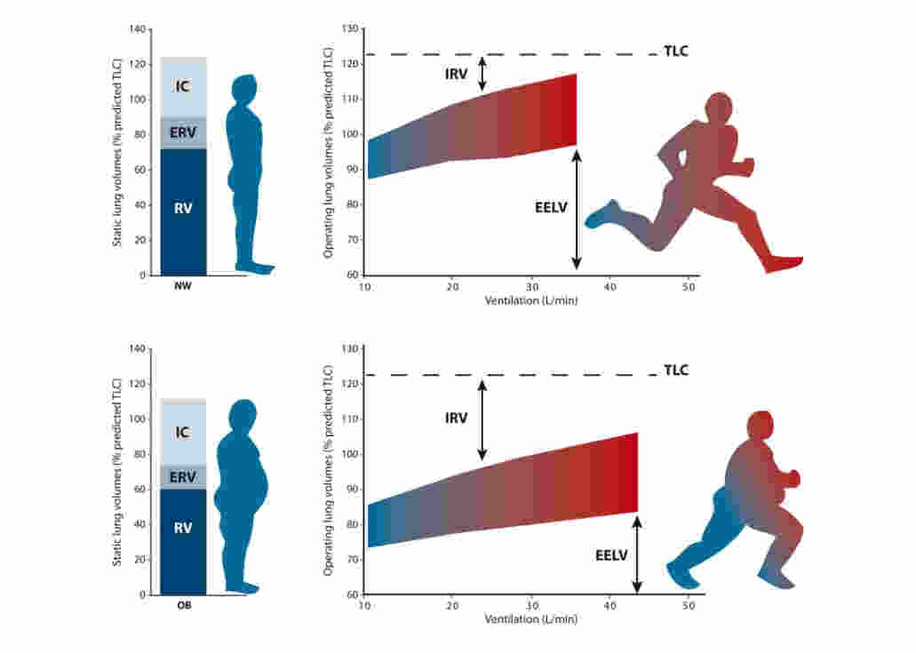 effects exercise pulmonary ventilation rate Effect of exercise on systolic and diastolic blood pressure, mean arterial pressure, and systemic vascular resistance effect of exercise on breathing rate, lung volumes, lung capacities, and minute ventilation.